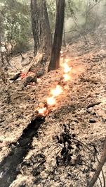 The CZU Lightning Complex Fire