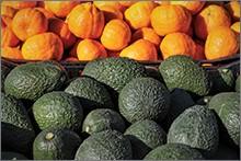 citrus and avocados