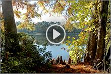 Forest videos