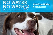 No Water No Wag